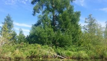 cedar-river-preserve-02