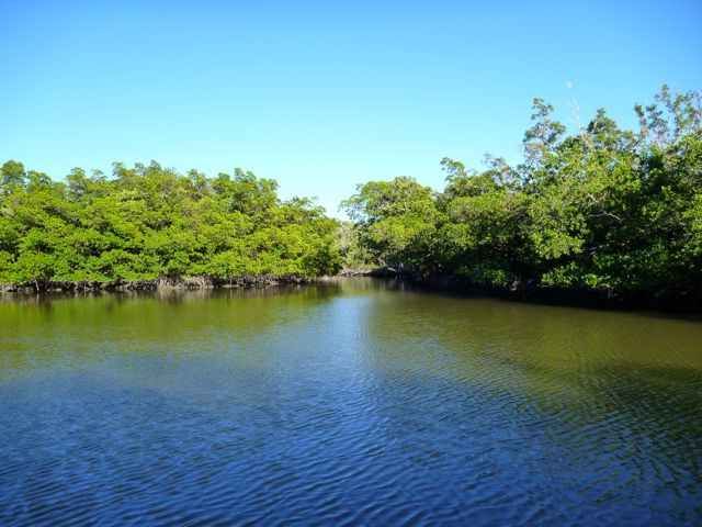 kayaking-mangroves-naples
