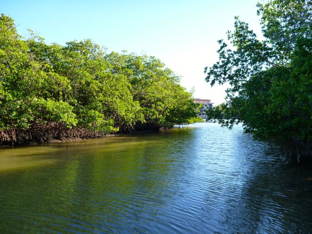 mangroves-naples-kayaking