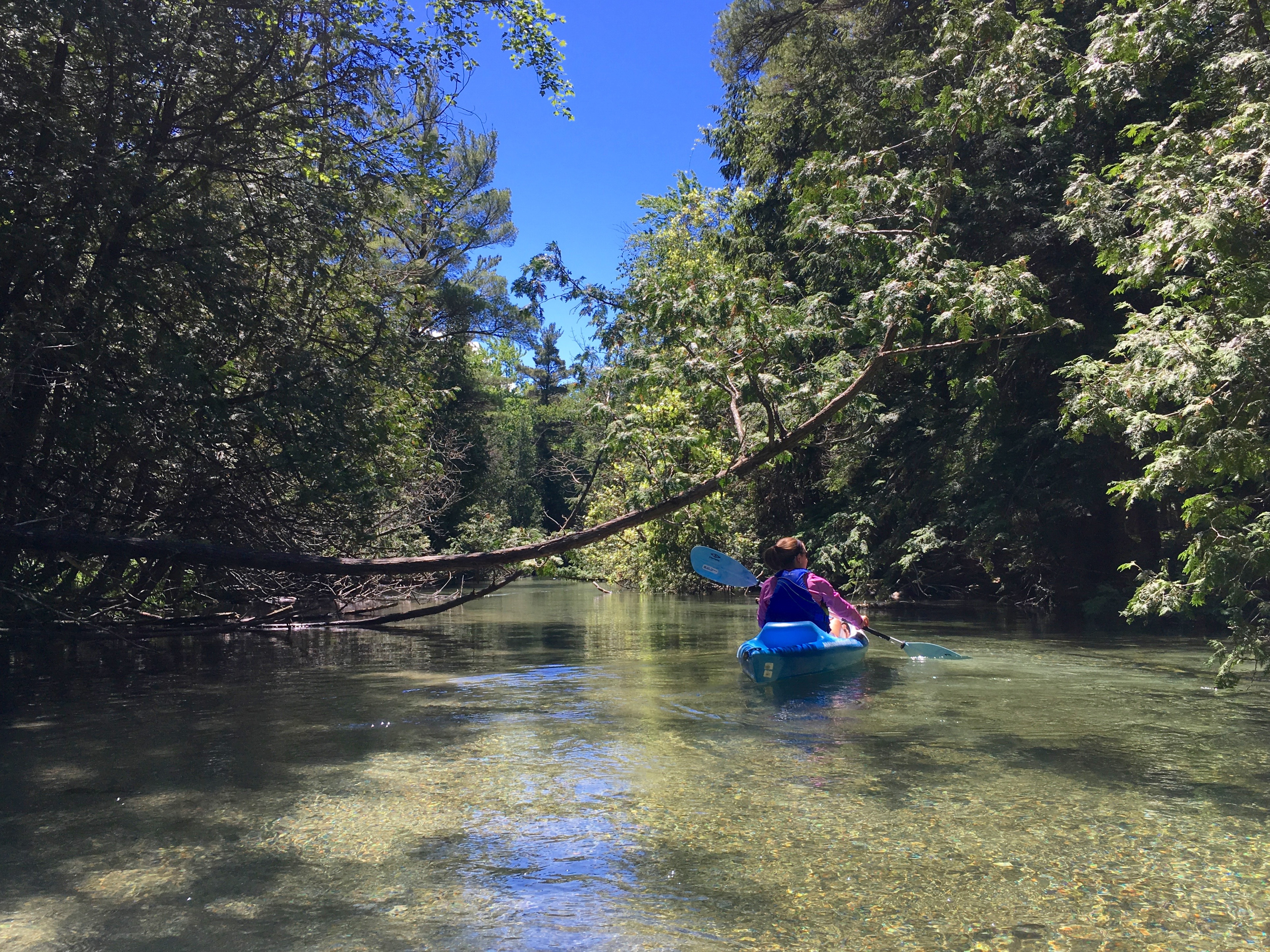 Crystal River Shuttle & Kayak Tours & Kayak and Paddle Board